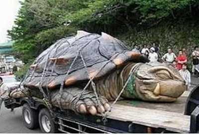 最大的乌龟有多大 全球最大的乌龟要用卡车拉