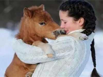 世上最大的马还存在吗? 很多人当宠物养了