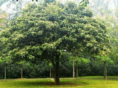 树上的树 观赏树种价值高的有?#30007;? width=