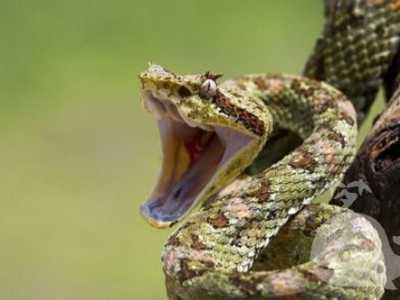 梦见被蛇咬 梦见自己被毒蛇咬
